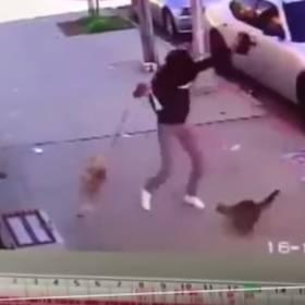 Kot-PSYCHOPATA atakuje bezbronnego psa!