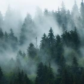Sceny jak z horrorów w polskich lasach! Uciekać czy dzwonić na policję?