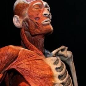 """""""Body Worlds Vital"""" w Poznaniu. Wystawa już gotowa!"""