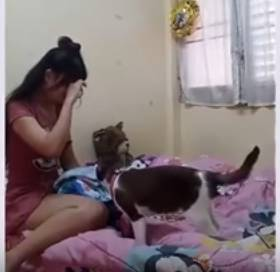 Dziewczyna płacze. Reakcja kota sprawi, że zrobi Ci się ciepło na sercu!