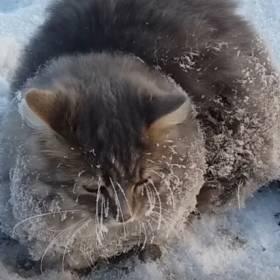 Ten kot przymarzł do lodu. Mogła czekać go śmierć!