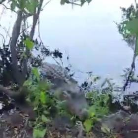Artur Szpilka zawstydził aligatora. Ten film podbija Internet!