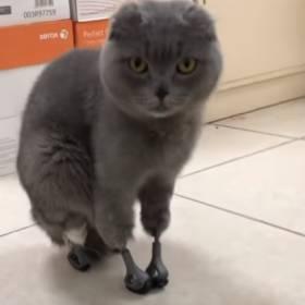 Kotka odmroziła sobie cztery łapki i uszy. Teraz znowu może chodzić!