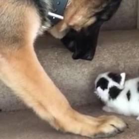Kotek w towarzystwie owczarka próbował wejść po schodach. W końcu pies zrobił coś niespodziewanego!