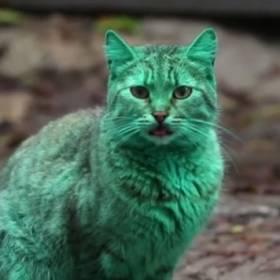 Zielony kot robi furorę na bułgarskich ulicach!