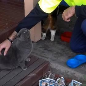 Reakcja tego kota na drapanie po pleckach jest rozwalająca!