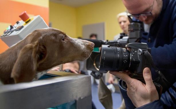 Oprawca psa Fijo trafi do więzienia. Sąd wydał wyrok