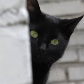 CIA szkoliła do szpiegowania... koty, kruki i delfiny. Agencja odtajniła dokumenty