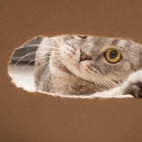 Kot był uwięziony w kontenerze ze słodyczami przez 19 dni. Przeżył, bo jadł cukierki...