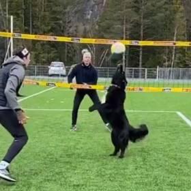 Suczka grająca w siatkówkę stała się hitem internetu! Pomaga utrzymywać formę Mathiasowi Berntsenowi