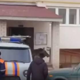 Rosja: Rzuciła kotem, by przepędzić łosia spod bloku... [WIDEO]