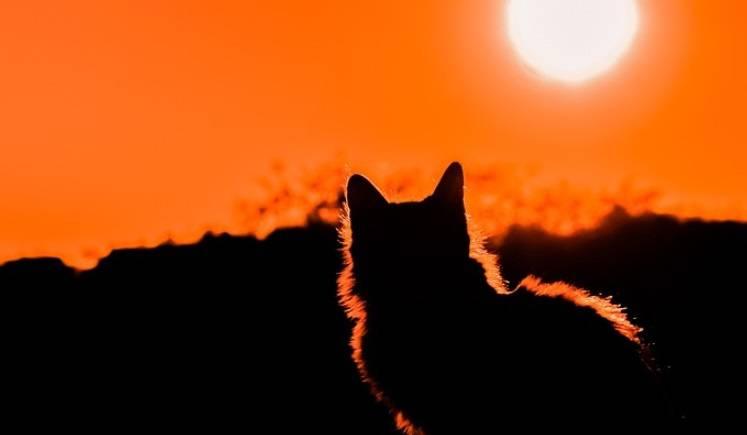 Kot Podróżnik Przeszedł 1100 Km W Poszukiwaniu Domu Problem