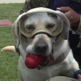 Pies Frida przechodzi na emeryturę. Przez 9 lat służyła w marynarce wojennej