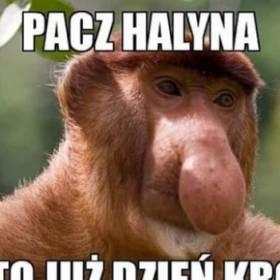 Typowy Janusz Maxxx News Rmf Maxxx