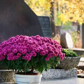 Czy wizyta na cmentarzu jest zakazana? Czy można iść na cmentarz? Czy cmentarze są zamknięte?