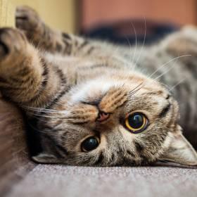 Cały i zdrowy kot odnaleziony po 12 latach! Historia nie zakończyła się jednak happy endem...