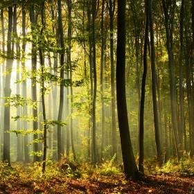 """W polskim lesie zauważono """"białą zjawę"""". Zdjęcia zwierzęcia podbijają sieć"""