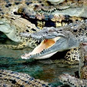 Krokodyle rozszarpały ich sąsiada. W zemście zamordowali prawie 300 gadów [18+]