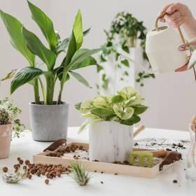 Co zrobić z roślinami domowymi podczas urlopu? Poznaj najskuteczniejsze sposoby!
