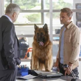 """Główny bohater z serialu """"Komisarz Alex"""" odchodzi z planu! Kto go zastąpi?"""