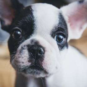 Urlop dla nowych właścicieli szczeniaków i kociąt w Skandynawii