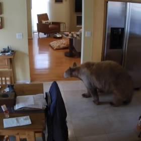 Niedźwiedź kontra dwa waleczne pieski! Zaskakujące nagranie z monitoringu trafiło do sieci [WIDEO]