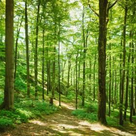 Unia chce zasadzić miliardy drzew. Największy projekt od lat