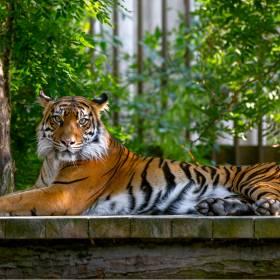 """Carole Baskin wygrała w sądzie. Przejmuje zoo """"Króla Tygrysów"""""""