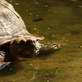 Żółw i rekin najstarszymi zwierzętami na świecie. Mają po kilkaset lat