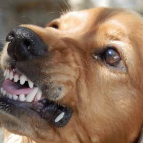 Większa grzywna za brak smyczy na spacerze z psem: Nowe przepisy już obowiązują!