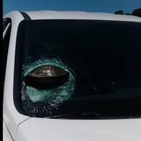 Przelatujący żółw spowodował wypadek. Wbił się w szybę samochodu…[WIDEO]