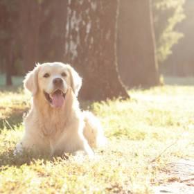 Sąsiedzka historia miłosna dwóch psów. Właścicielka jednego z nich nie wierzyła w to, co widzi!