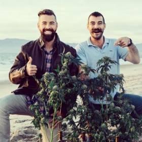 Winiarnia Rebel Coast produkuje wino z... marihuany!