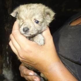 Zapchlone, bez sierści i trzymane w tapczanie... 40 psów z interwencji potrzebuje pilnej pomocy!
