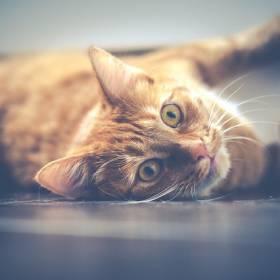 Sylwester 2018/2019: Jak zadbać o kota?
