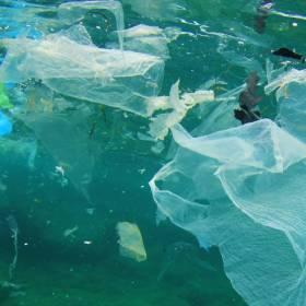 Przerażające znalezisko na wybrzeżu Filipin: W brzuchu martwego walenia znaleziono 40 kg śmieci