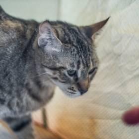 Chciał sprawdzić, co robi jego kot, gdy on śpi: Właściciel otrzymał wyjątkowe ujęcia!