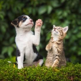 Koronawirus. W nowojorskich schroniskach brakuje psów i kotów do adopcji