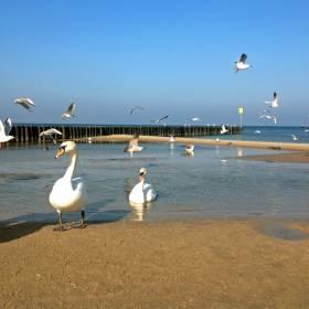 Sinice znów nad Bałtykiem! 17 plaż zamkniętych