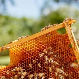 Ktoś otruł 420 tysięcy pszczół. Policja zatrzymała 34-letniego mężczyznę