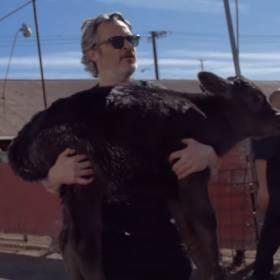 Joaquin Phoenixuratował krowę i cielę z rzeźni. Nagranie z akcji trafiło do sieci! [WIDEO]
