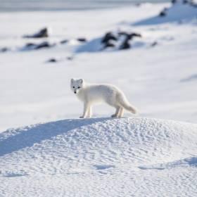 Naukowcy z PAN szukają ochotników na biegun północny! Dołącz do 43. wyprawy polarnej na Spitsbergen