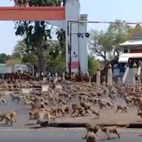 Dzikie zwierzęta na ulicach? Tak wygląda rzeczywistość podczas pandemii koronawirusa! [ZDJĘCIA]