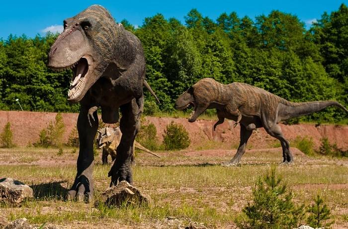 żarty z dinozaurami jak zapytać faceta, czy się umawiamy